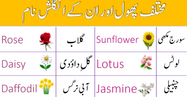 Flowers Names in English With Urdu Meaning for English Speaking