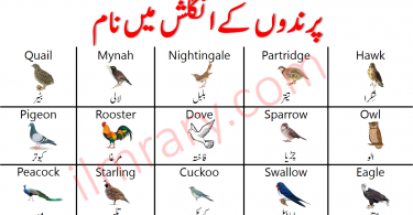 Birds Names in Urdu   Names of Birds In English with Pictures